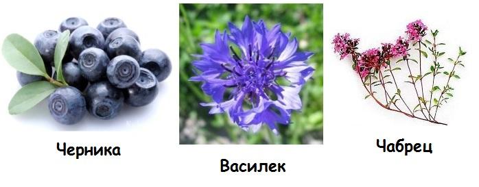 Чабрец, черника и василек