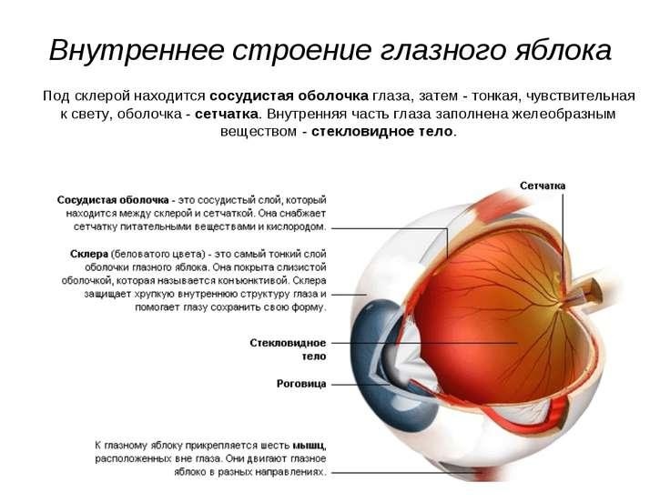 Внутреннее строение глазного яблока