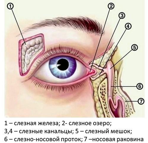 Воспаление слезного мешочка