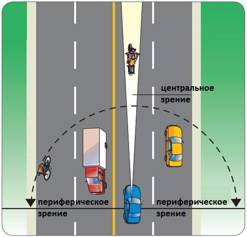 Центральное и периферическое зрение водителя