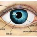 Глаз и его строение