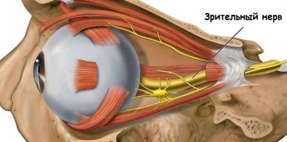 Расположение зрительного нерва