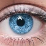 Глаз - орган зрения человека