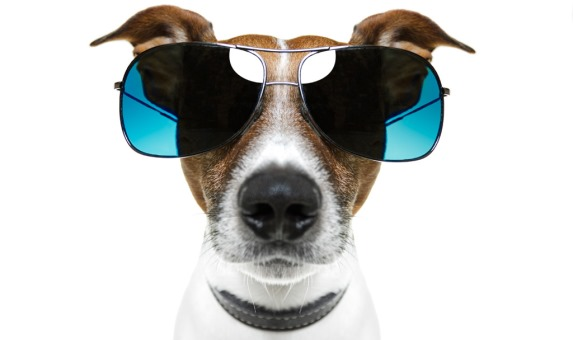 Собачка в солнцезащитных очках
