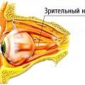 Схема расположения нерва