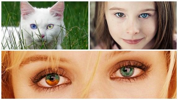 Разные глаза у людей и животных