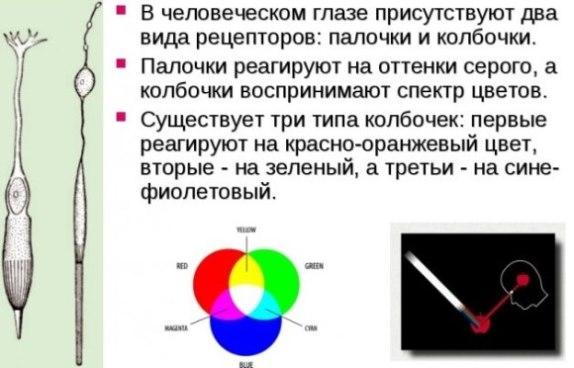 Принцип цветового зрения