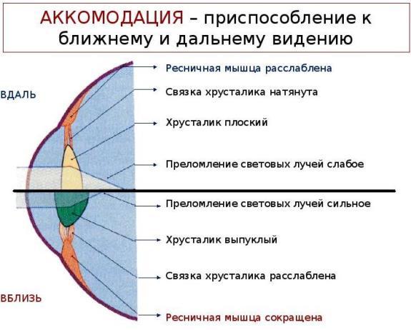 Схема, иллюстрирующая принцип аккомодации глаза